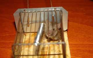 Избавиться от мышей в гараже быстро и навсегда — проверенные советы