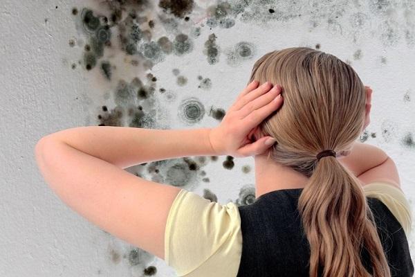стена в плесени